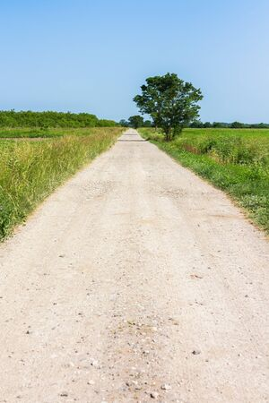 Country dirt road leading away, surrounded with green grass and one lonely tree by the road, on a hot summer day, with bright blue sky