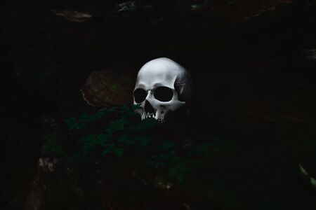 White human skull in a dark forest nook, spooky and mysterious, Halloween concept 스톡 콘텐츠