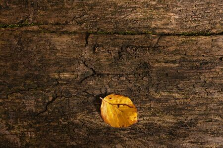 One golden yellow fallen leaf on  an old, weathered wooden plank