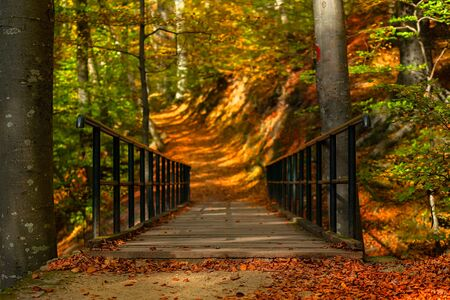 Old wooden bridge on mountain forest hike trail in autumn, sunlight coming thru the trees 스톡 콘텐츠