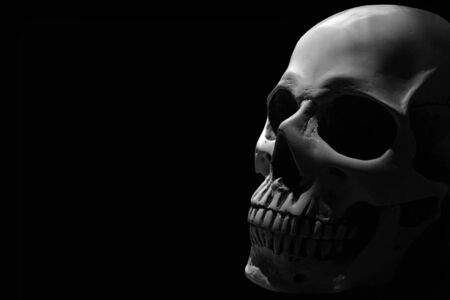 White human skull on the black background partly in shadow