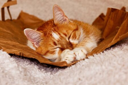 Pretty orange and white cat lying on the paper bag on the fluffy white bed, his paws in front of his face, sleeping 스톡 콘텐츠