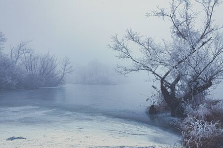 Frozen lake in misty winter morning surrounded with trees without leaves covered in frost, winter scene