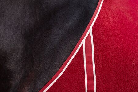 Close up detail of black horse covered with red blanket with white details