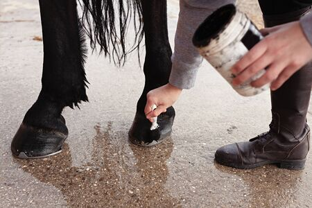 Woman spreading black ointment on horse hoof with a brush, holding ointment in hand