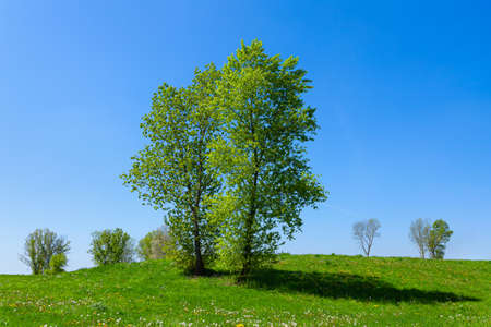 Small hill with trees, green meadow and blue sky on a bright summer day