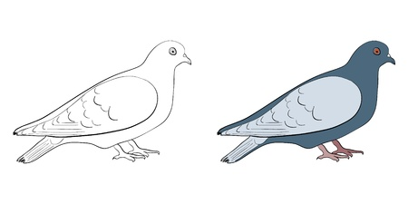 oiseau dessin: Silhouette de Colombe  Illustration