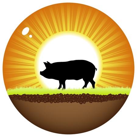 swine flu: sunshine ball with pig Illustration