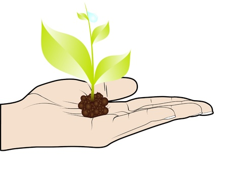 green plant in human hand Vector
