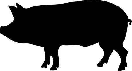 contour of pig vector illustration