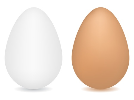 Eggs vector illustration