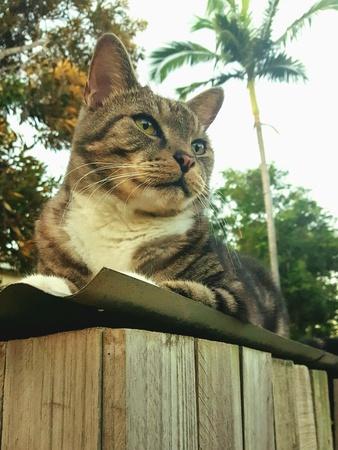 eye: Cute tabby cat lying on tin roof, in Townsville Australia.