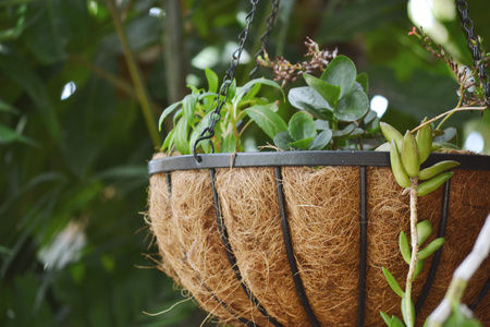 Succulent plants in a hanging basket