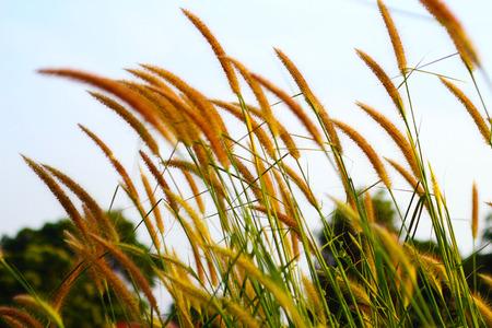 fantasque: herbe