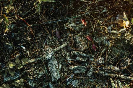 Dry tree bark, pine needles and fallen leaves on dark mossy ground 版權商用圖片