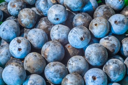 Many ripe blackthorn texture or background. Zdjęcie Seryjne