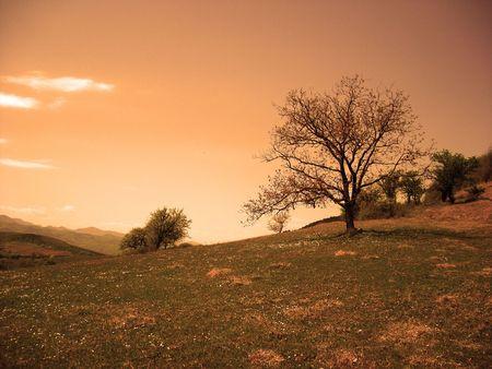 photomanipulation: autumn trees sky grass clouds orange