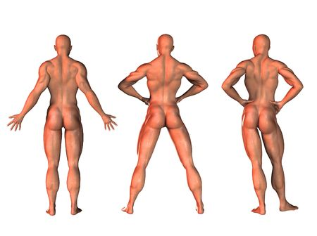 3d nude: three 3d fitness figures  in different poses