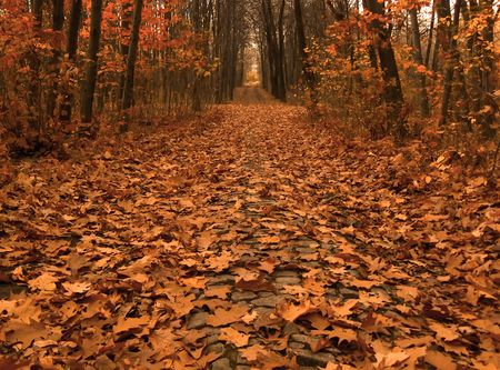 autumn picture of fallen leaves on a path across the wood photo