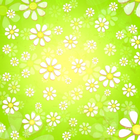 spring background with white daisy flowers over yellow green gradient photo
