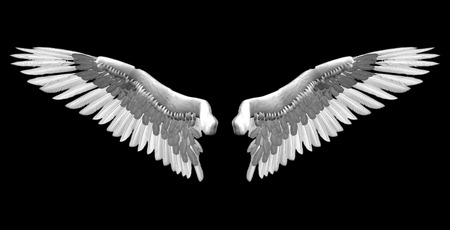 animal angelic: white wings - 3D isolated illustration over black background Stock Photo