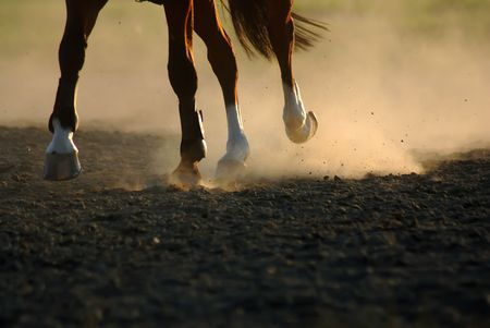Horse in a gallop with feet in sand Stock Photo - 3933900