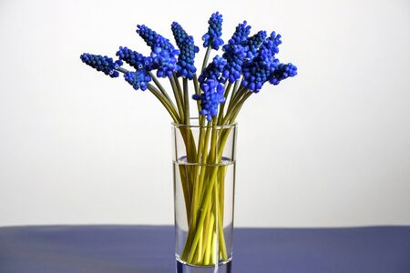 Bouquet of blue spring flowers in a transparent glass vase. Grape Hyacinths. Selective focus. Copy space. Stok Fotoğraf