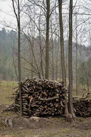 Woodpile of firewood stacked between trees against the backdrop of a foggy mountain with green pine trees. Close-up. Selective focus.