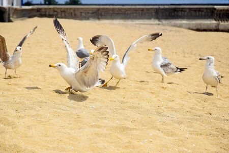 Wildlife: Group of seagulls frolic on the seashore. Beach story. Selective focus. Copy space. Close-up.  Banco de Imagens