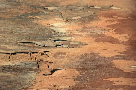 The inside of the tree bark. Traces of damage from the bark beetle. Natural background. Selective focus. Close-up. Copy space.