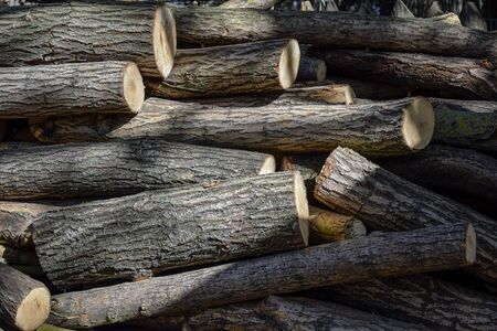 Sawn tree trunks. Harvesting firewood for the winter. Side lighting with shadows. Natural background. Selective focus. Close-up. Copy space.  Banco de Imagens