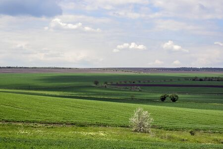 Rural, rustic landscape  with green agricultural fields, trees and grass on spring hills. Picturesque spring view on cloudy day. Beautiful natural background.