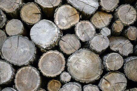 Wall of old wooden logs with cracked ends. Beautiful pattern of annual rings on the cut of the tree. Rural life. Background. Close-up. Selective focus. Banco de Imagens