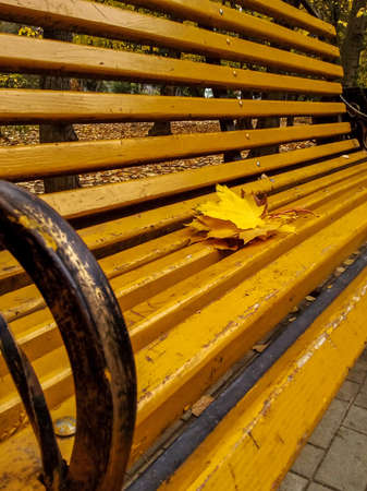 Bouquet of yellowed leaves of sycamore tree on old yellow wooden bench in city park, autumn landscape. Selective focus.