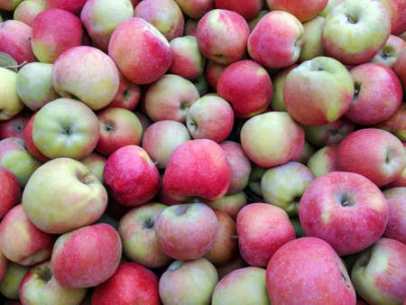 Bulk Apples in Bin. Ripe sweet red apples. Fresh organic apples from above for sale. Close-up. Selective focus. Full frame. Banque d'images
