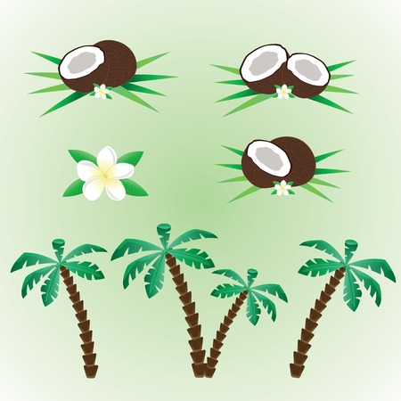 Illustration of coconut set with palm and coconut