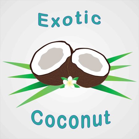 Coconut with flower and leafs on white. Vector illustration. Vector