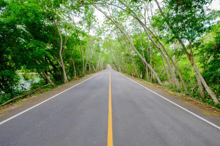 no pase: No pase con la línea es sólida en el lado de la carretera del árbol es un largo camino. Foto de archivo