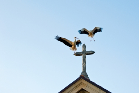 Storks on the church cross spreading their wings photo