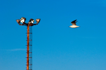 Seagull flying near public lighting  photo