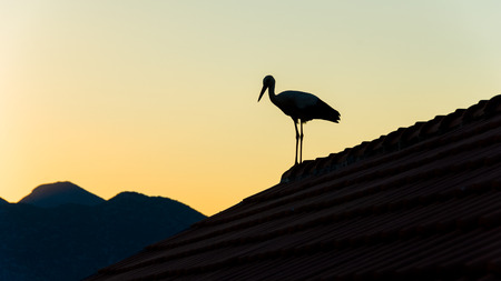 Stork standing on the roof against colorful sky making silhouette  photo