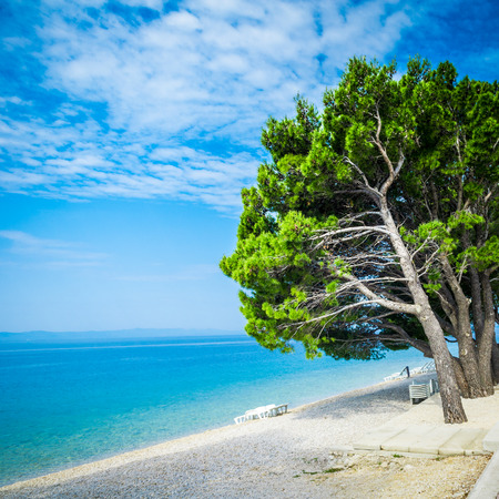 Beautiful azure blue Mediterranean beach surrounded by green trees in Croatia