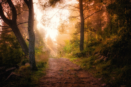 in the woods: Path through the woods and light rays as they break through morning mist Stock Photo