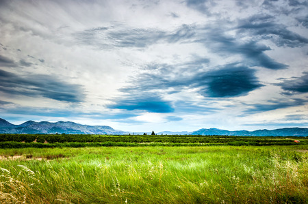 soothing: Soothing view of the green meadow and cloudy sky