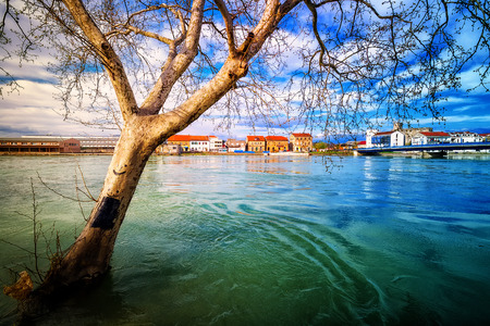 eugene: Dry tree protruding from the swollen river during terrible floods Stock Photo