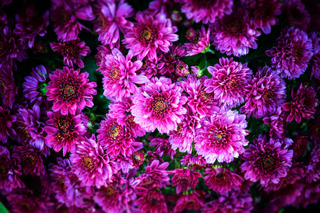 surreal: Surreal pink flowers Stock Photo