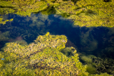 Nature and water pollution. Algae and seaweed in the water channel. Stock Photo