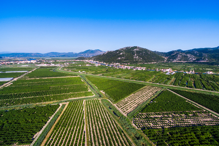 Large areas of fertile land and crops in southern Croatia in Neretva Valley