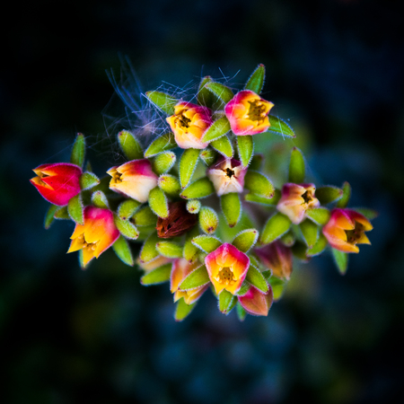 Surreal red, yellow and green flowers