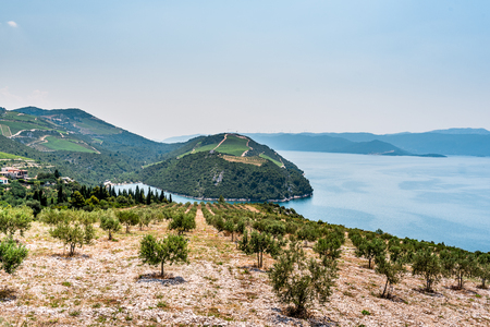 View from the hill on the Adriatic Sea in southern Croatia. Olive plantation in the foreground. Stock Photo